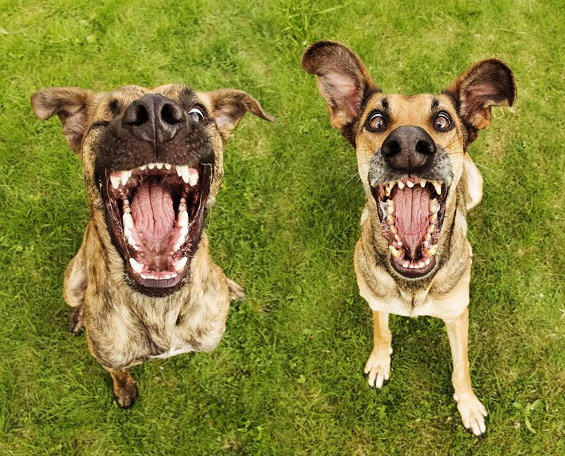 Elke vogelsang photos de chiens absurdes et humoristiques - Animaux humoristiques ...