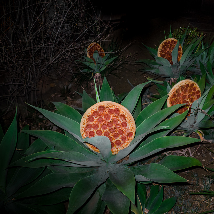 Pizza in the wild 4