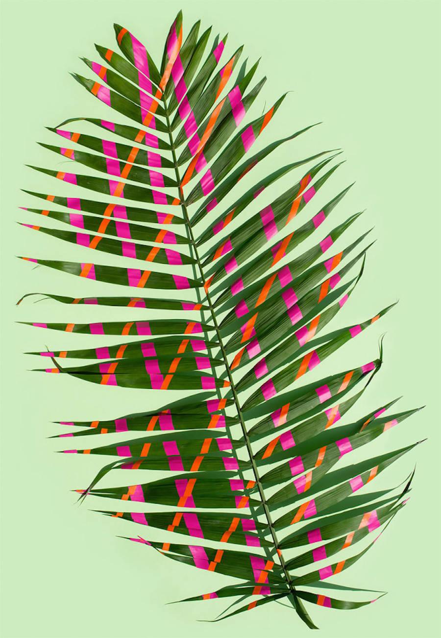 Wonderplants2