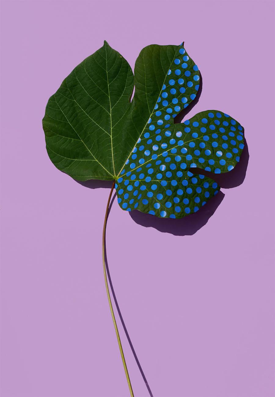 Wonderplants3