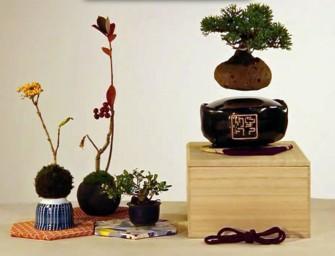Le Air Bonsaï, un joli petit bonsaï qui flotte et tourne dans les airs
