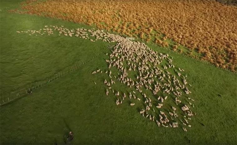 un troupeau vu du ciel3