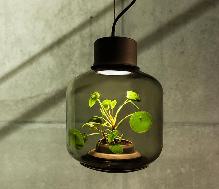 Plantlamp3